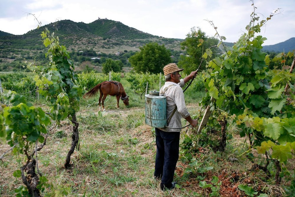 From Georgia to Lebanon: Exploring the Best Wines of the Ancient World